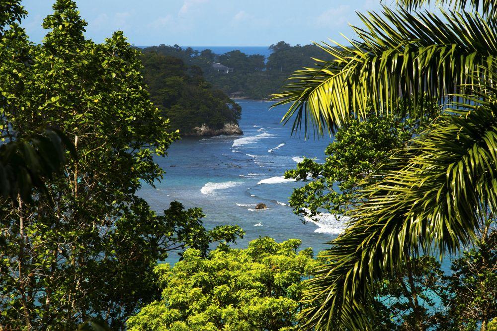 Giamaica, un dettaglio del paesaggio