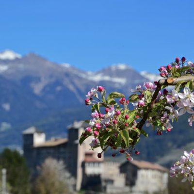 Val di Non, la fioritura dei meli è lo spettacolo di Aprile